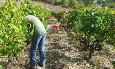 Clos Saint-Joseph: un vin de la montagne en Provence