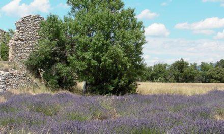 Cheminer au pays des Celtes et Ligures de Provence (1 /2)