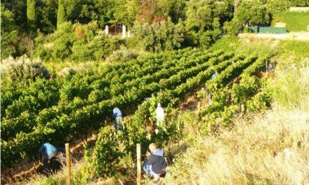 La Provence: des abbayes, des vins, des vins d'abbayes
